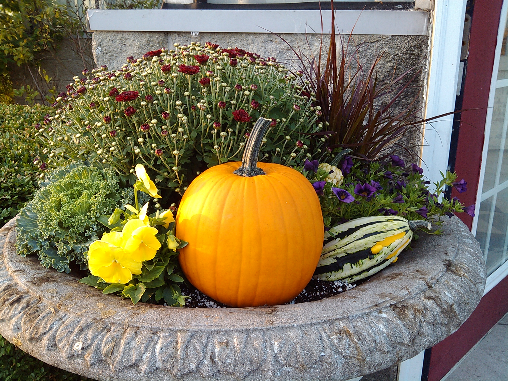 Affordable Fall Plants for Sale